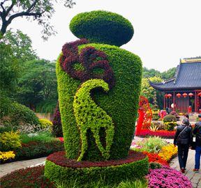 五色草造型绿雕扮靓城区风景
