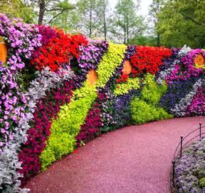植物墙立体绿化将如何改变生活?