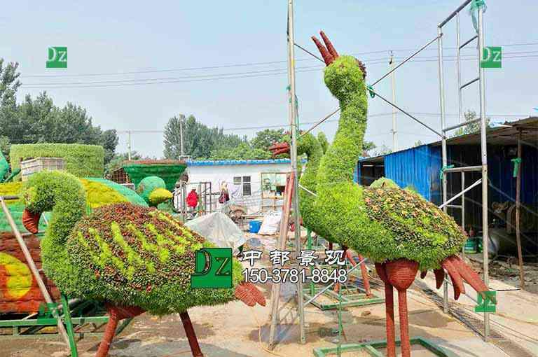 五色草造型绿雕丹顶鹤