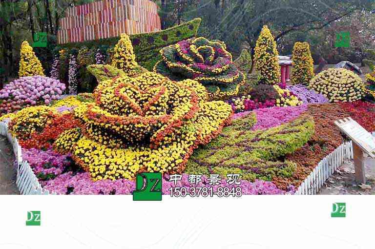 开封菊花造型