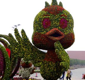 国庆菊花展开幕,带你领略江城的菊花风光