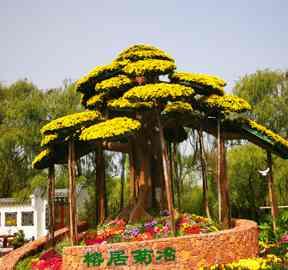 开封菊花造型在福建福州惊艳亮相