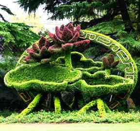 制作植物绿雕造型植物的选择方法